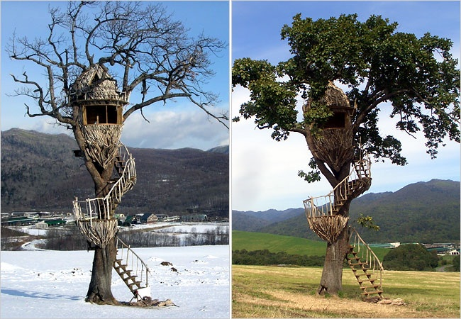 treehouse nescafe architecture