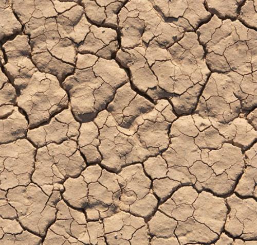 drought wallpaper green